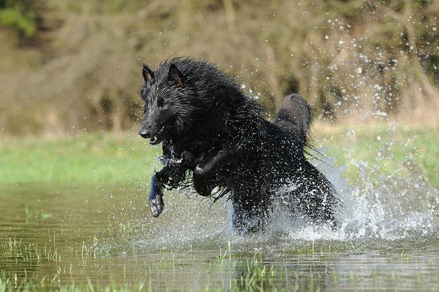 pes-ve-vode