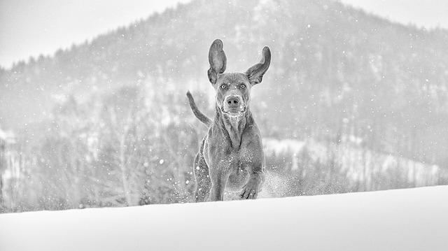Se psem v zimě na hory.