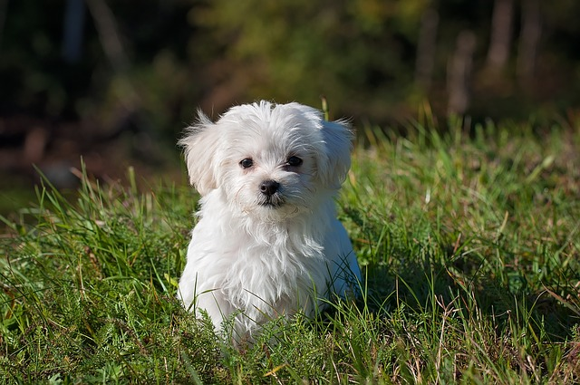 pes_na_zahrade