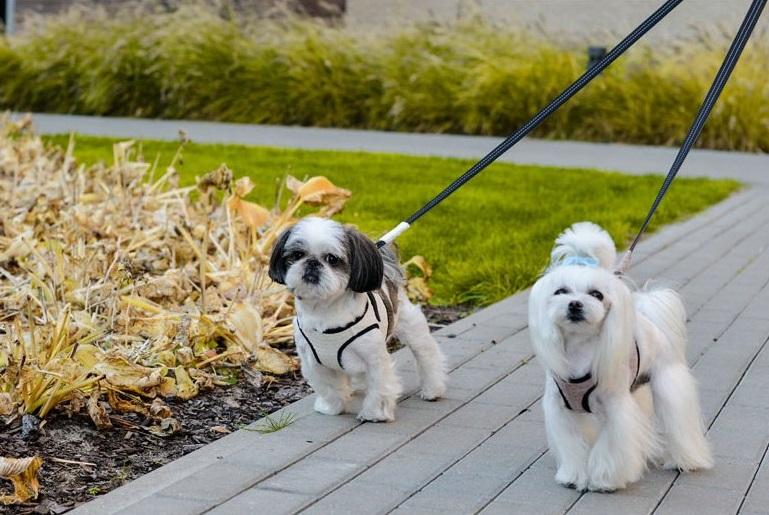 Postroje pro malé psy