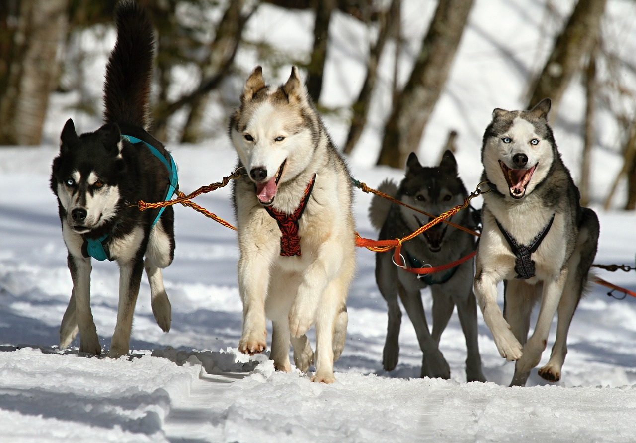 psi-sprezeni