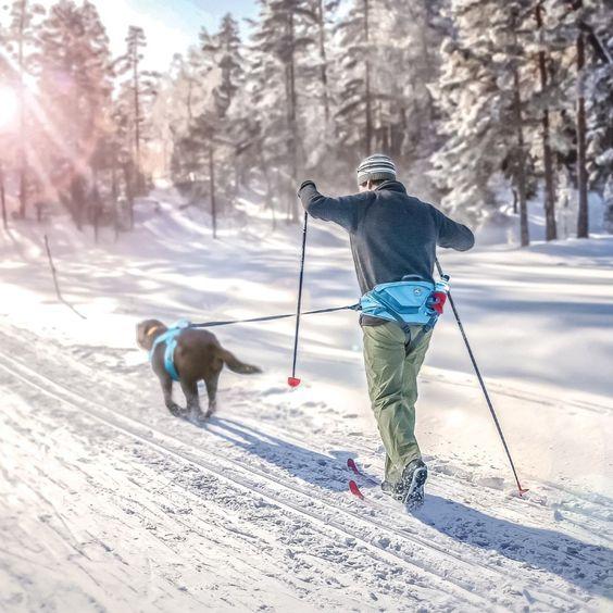 skijoring-se-psem