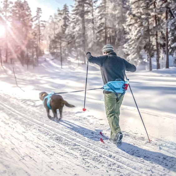 skijoring-se-psem_1