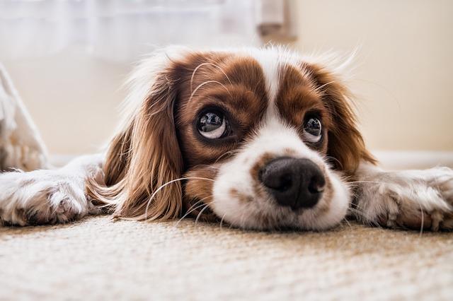 vystraseny-pes