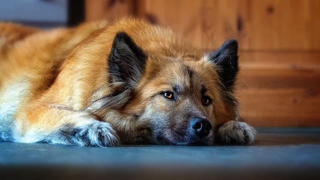 zdravy-pes