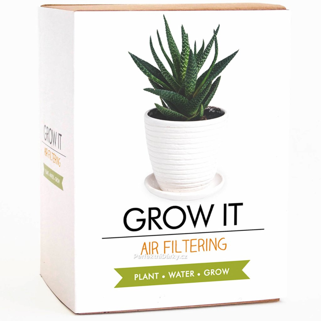 Květina pro lepší vzduch