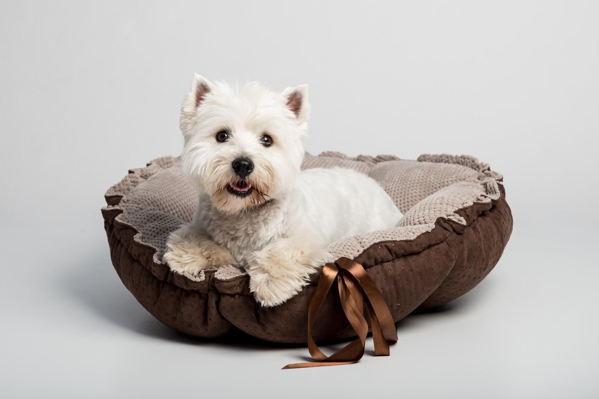 Jak a proč naučit spát pejska v pelíšku?