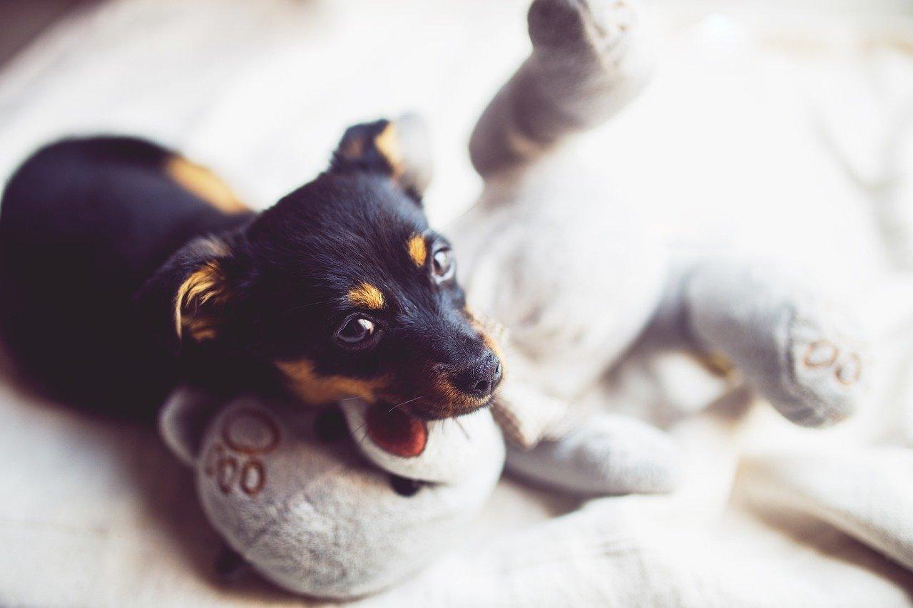 Vaše štěně ničí pelech? Víme, proč to dělá.