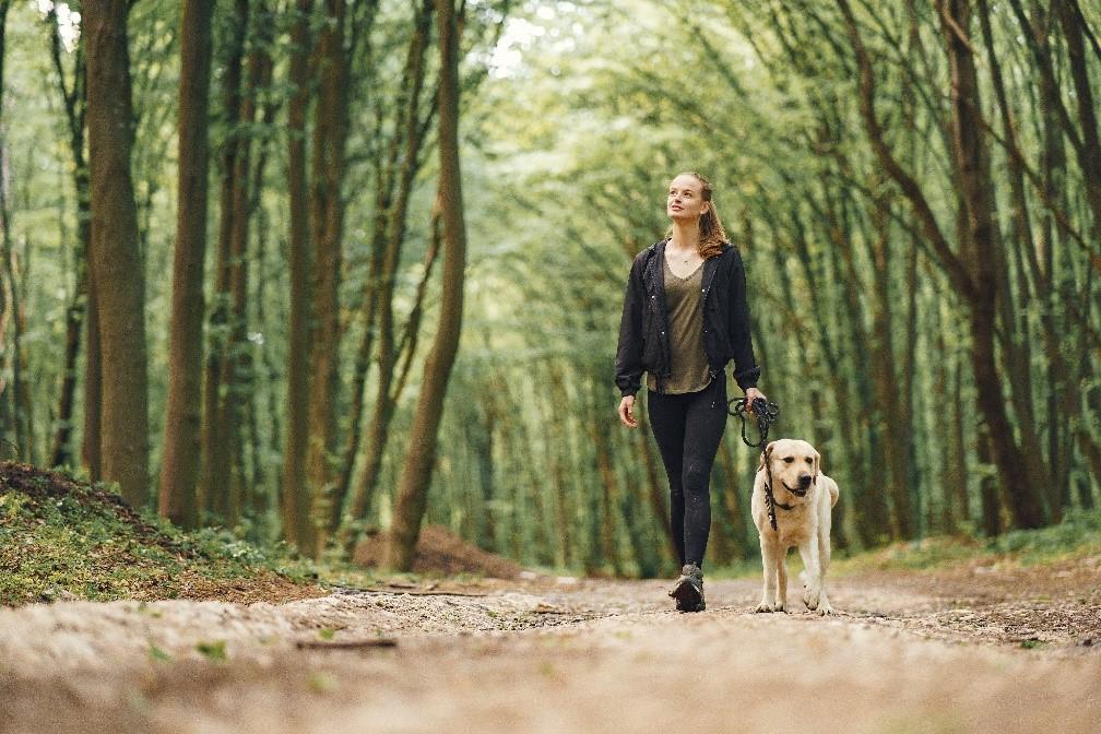 Tipy a triky pro každodenní venčení psů