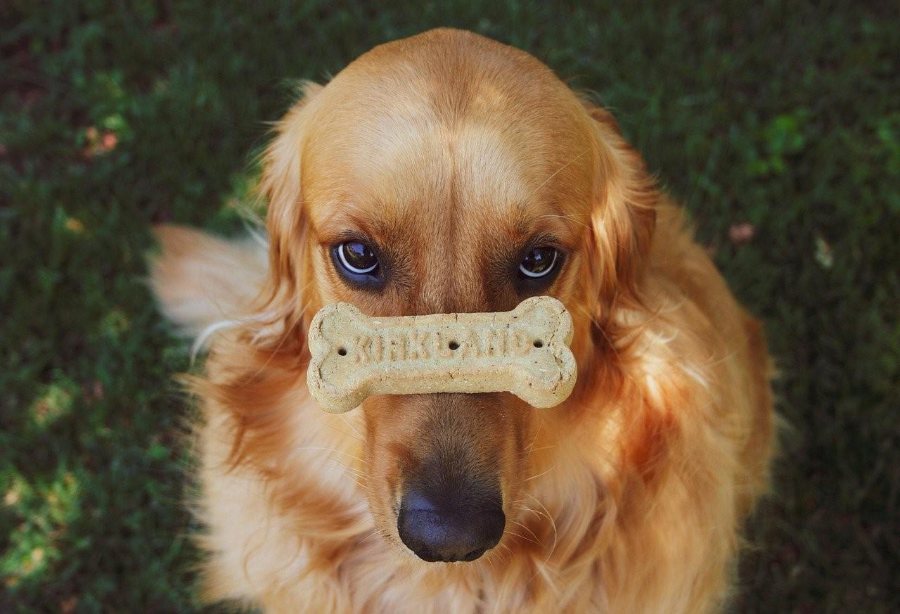 Pamlsky pro psy – dávat či nedávat? Jak vybrat ty správné a na co si dát pozor?