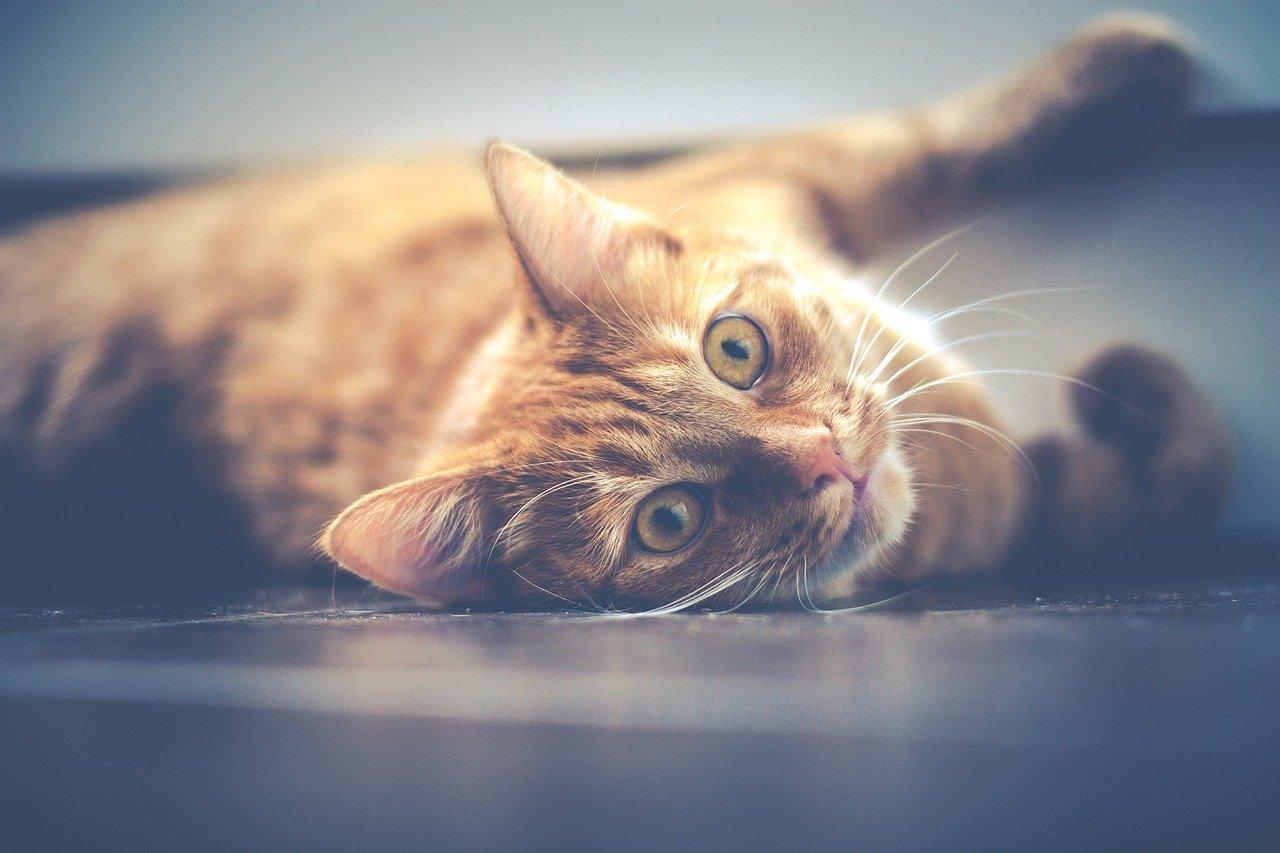 Jaké existují smrtelné nemoci koček a jak se jim vyhnout?