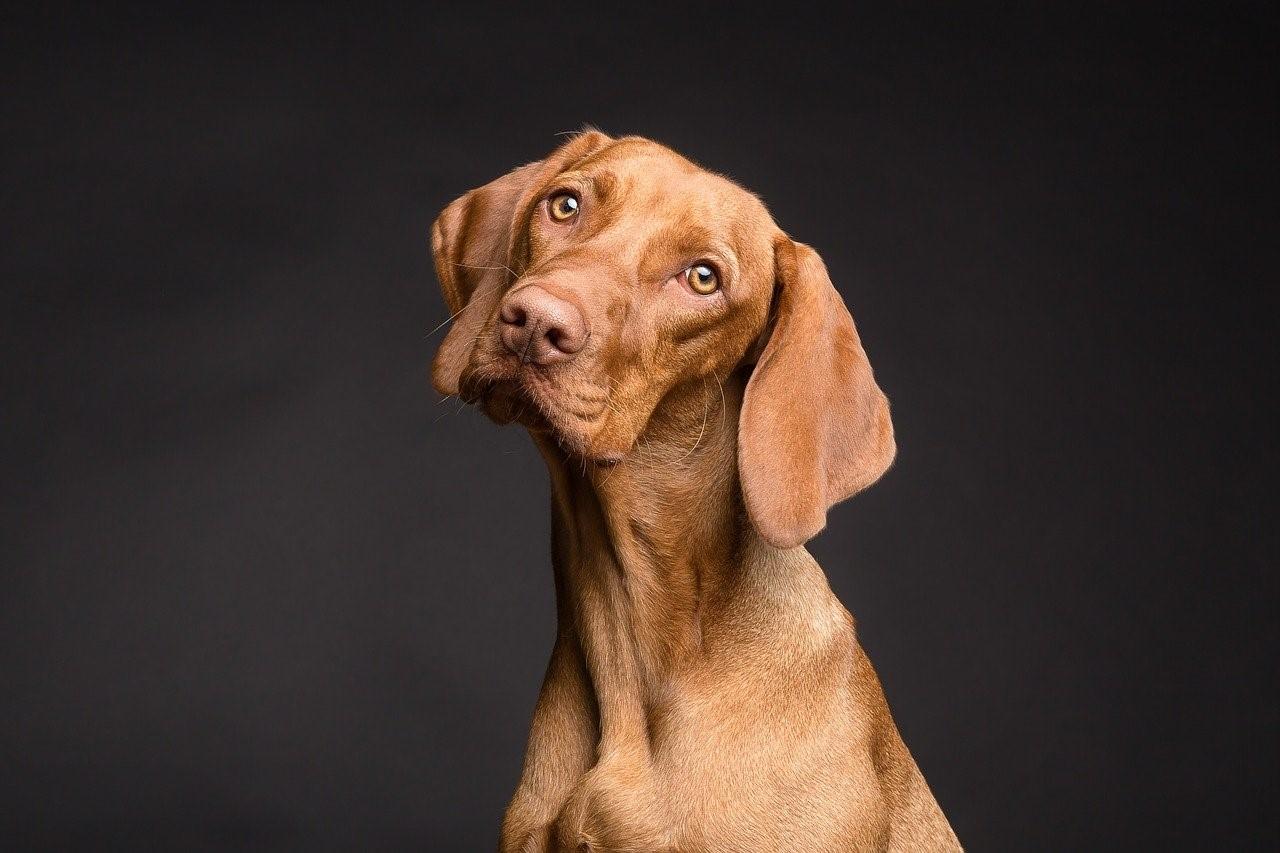 Má smysl zřizovat zdravotní pojištění psů?