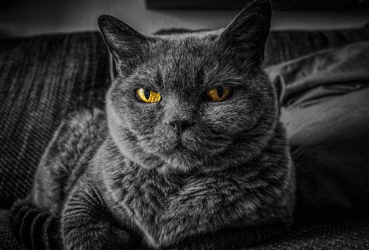 Jak dlouho vydrží kočka sama doma?