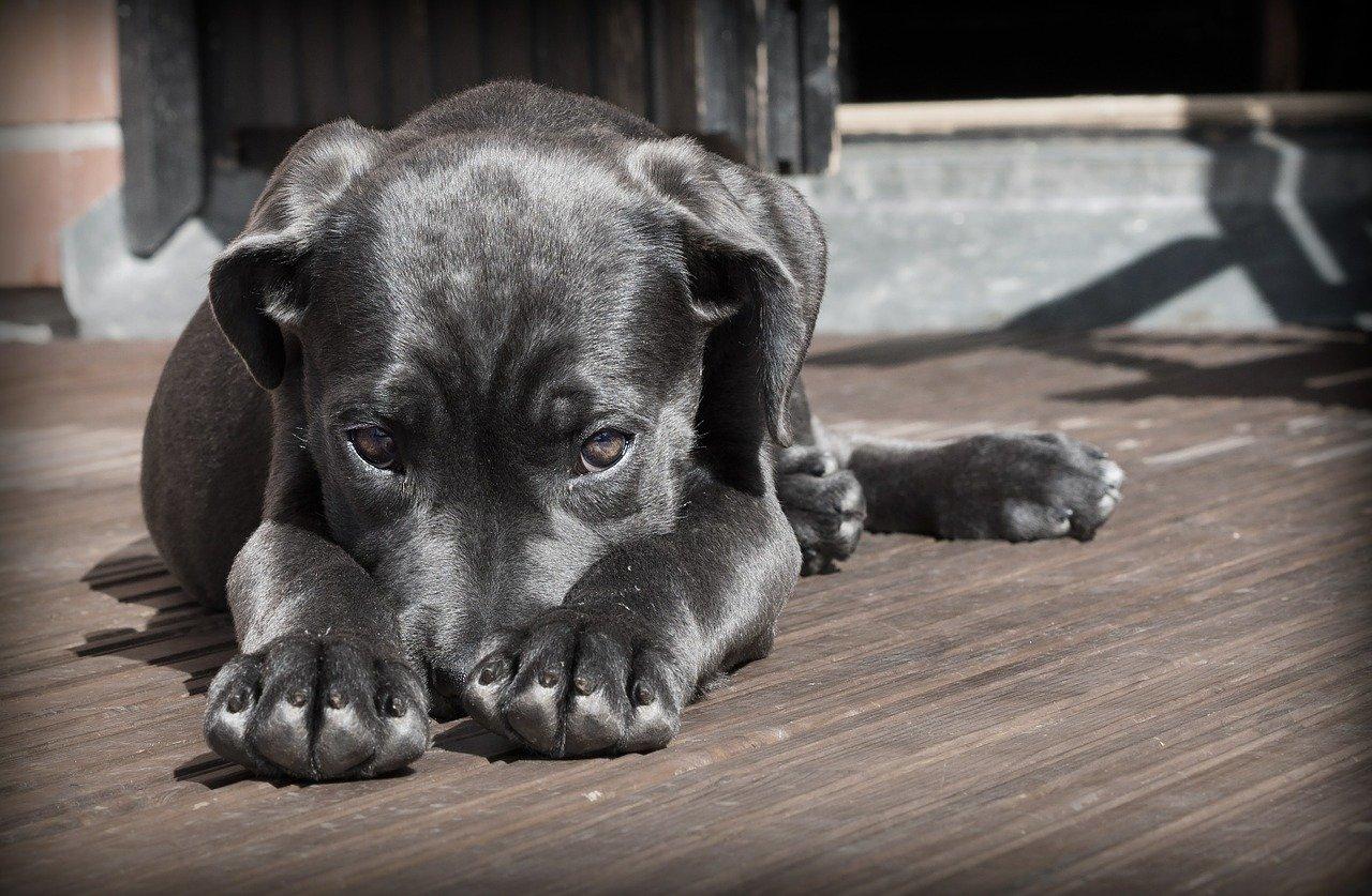 Co dělat, když je pes nachlazený? Jak mu co nejlépe pomoci?