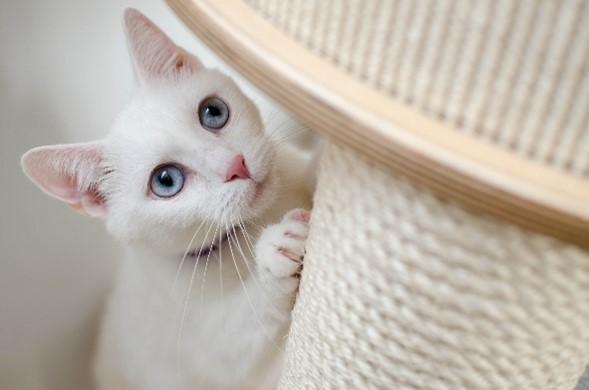 Proč pořídit škrabadlo pro kočku a jak vybrat to správné?