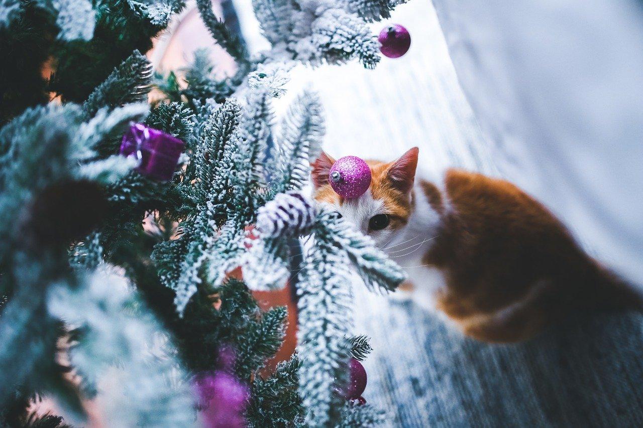 Tipy na vánoční dárky pro kočky