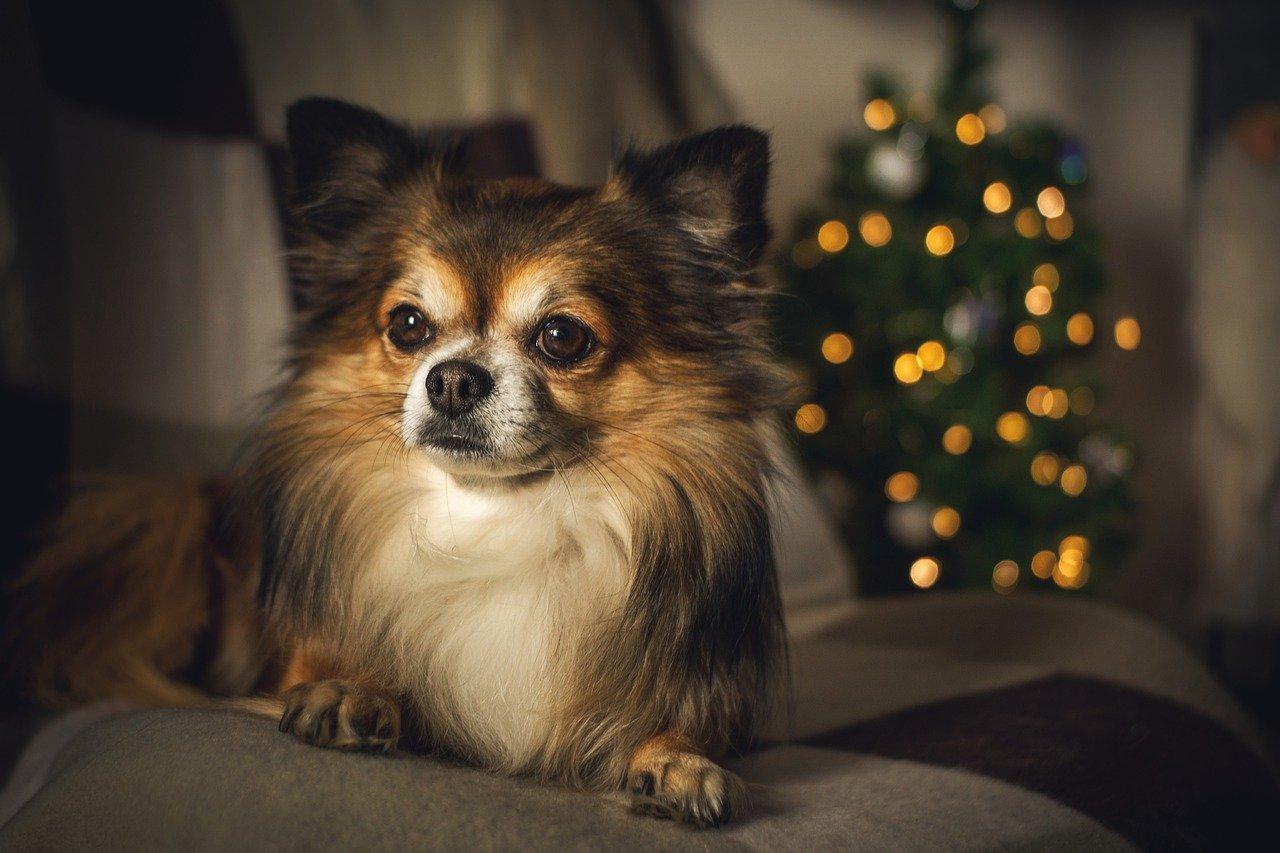 Tipy na vánoční dárky pro psy