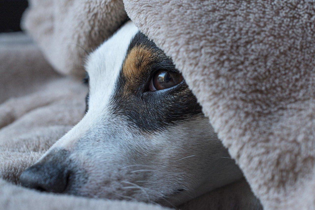 Pes-a-epilepsie