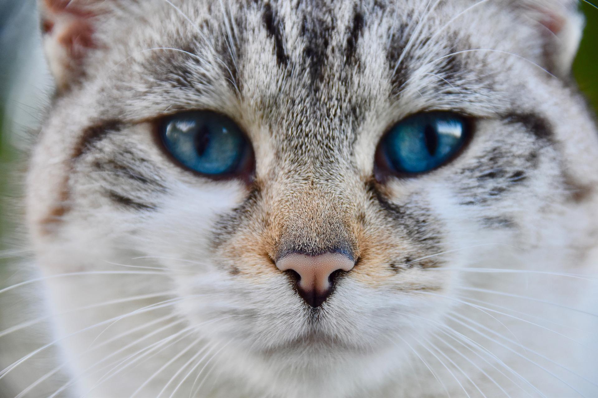 cat-4548812_1920