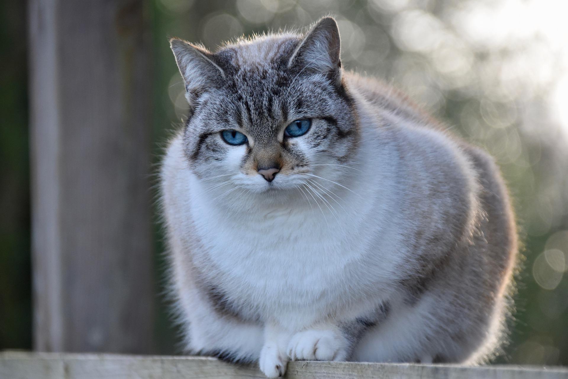 cat-4775906_1920