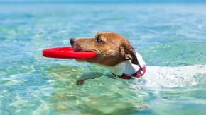 Jak naučit psa dobře plavat? Poradíme
