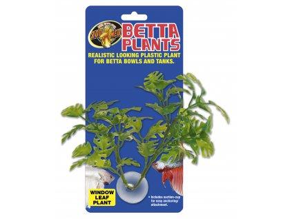 13392 betta plant rostlinka na sklo