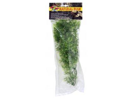13542 australian maple prirodni kerova rostlina
