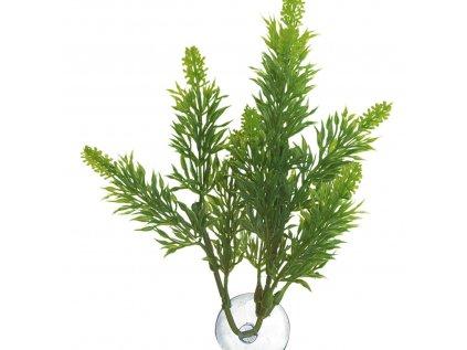 13548 malaysian fern prirodni kerova rostlina l
