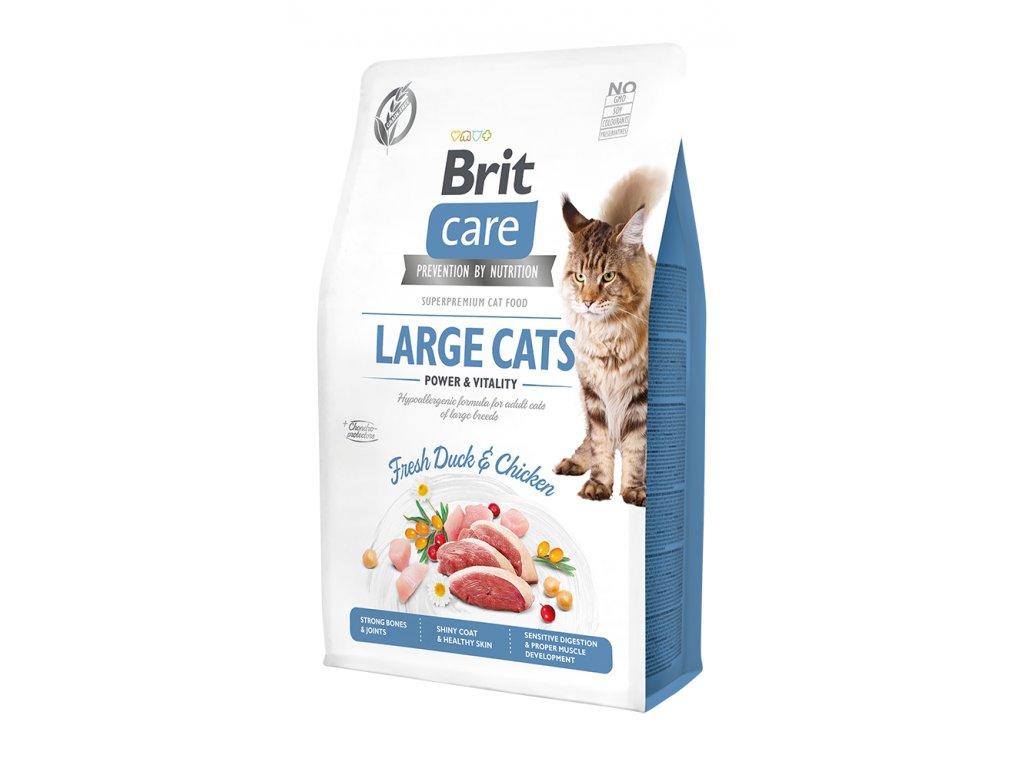 large cats 2kg