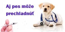 Aj Váš pes môže mať chrípku