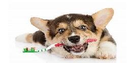 Ako chrániť chrup psa pred zubným kameňom