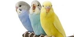 Choroby v chovoch exotických vtákov