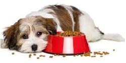 Najčastejšie chyby pri kŕmení psov