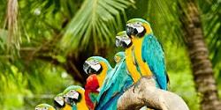 Čo by ste mali vedieť pred kúpou papagája