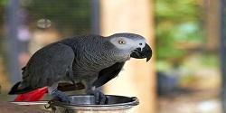 Informácie pre chovateľov papagája žako