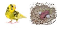 Príprava anduliek na hniezdenie