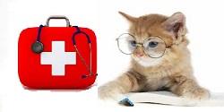 Prvá pomoc pre mačky