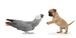 Ako si získate dôveru papagája