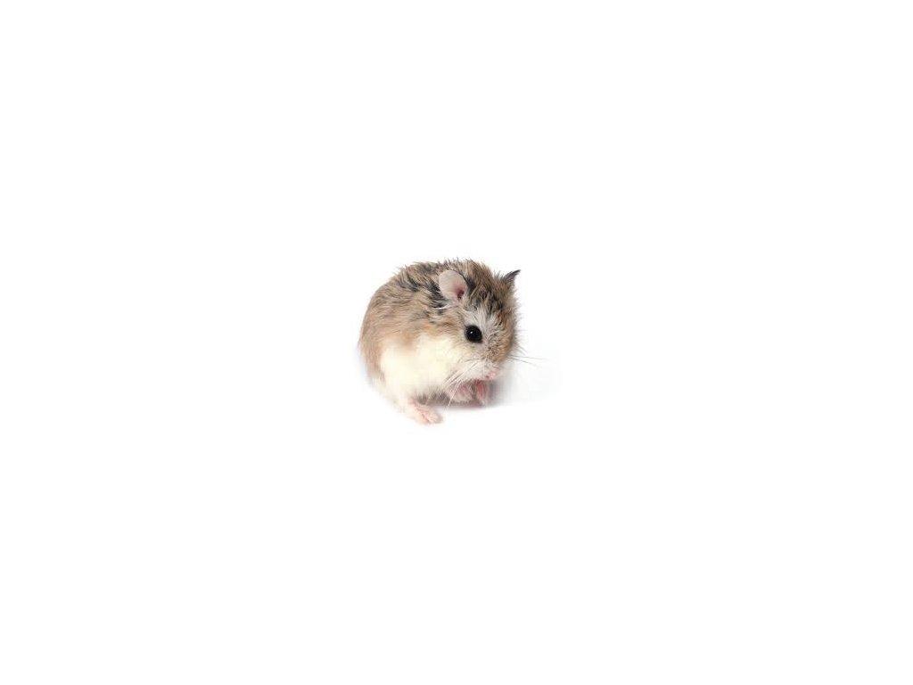 obrázky mačička a zadok