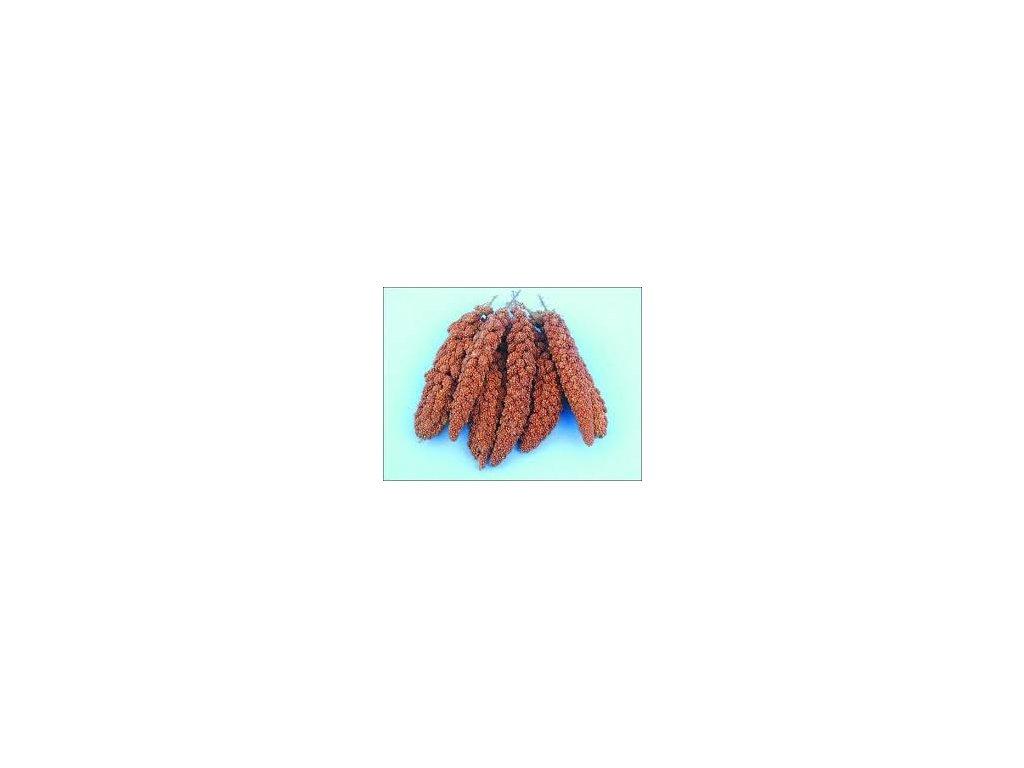 Proso senegalské červevé klasy