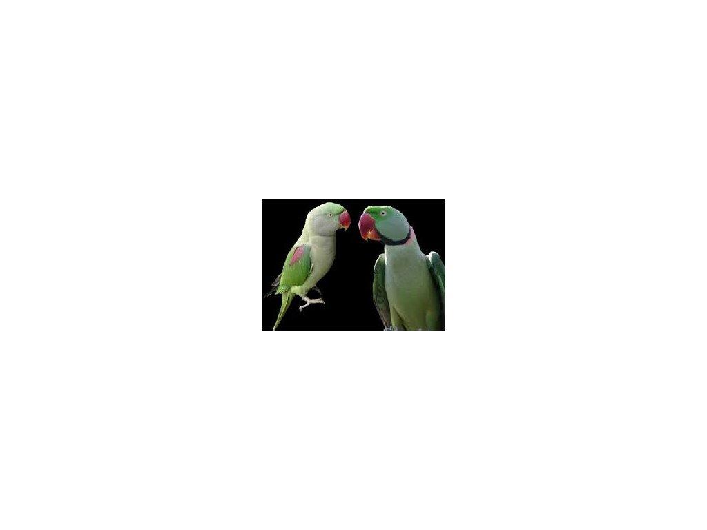 Veľké čínske vtáky