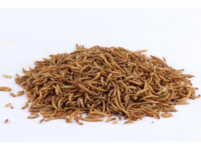 Sušený hmyz - múčne červy