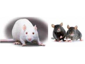 Potkan laboratórny