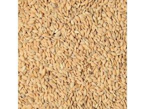 Paddy ryža