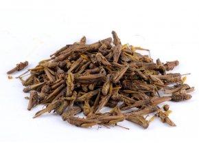 Sušený hmyz - Lúčne kobylky