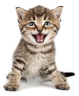 Potřeby pro kočky