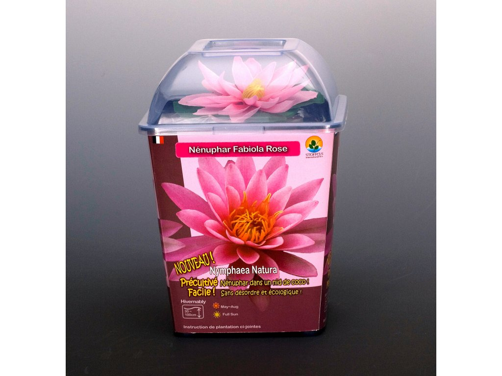 Leknín růžový, NYMPHAEA NATURA FABIOLA