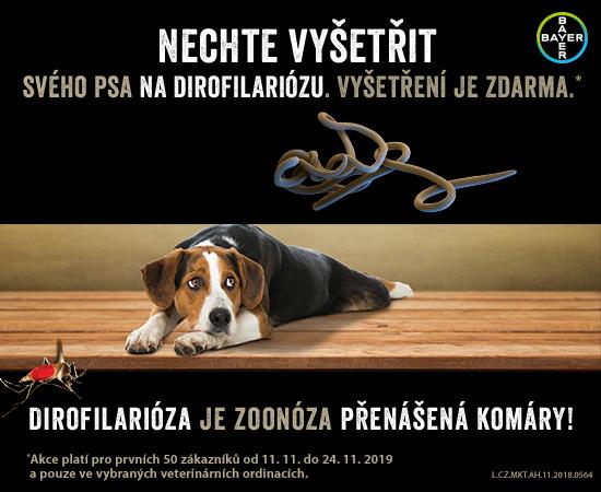 Nechte vyšetřit svého psa na dirofilariózu