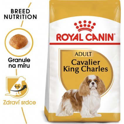 Cavalier King Charles Adult-1.5Kg