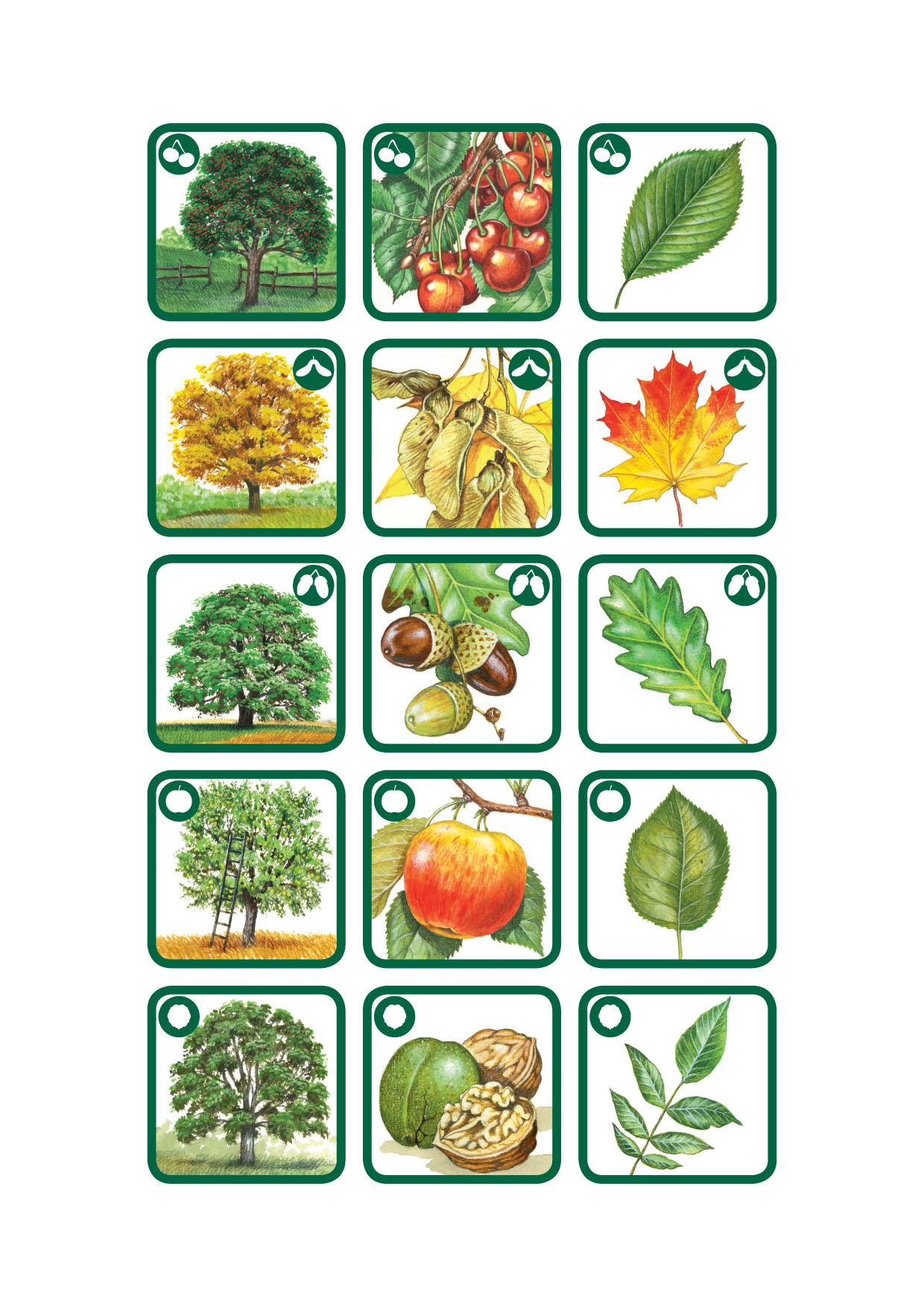 810-Trees-12x3-1